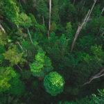 Gráficas Mera coa protección do medio ambiente